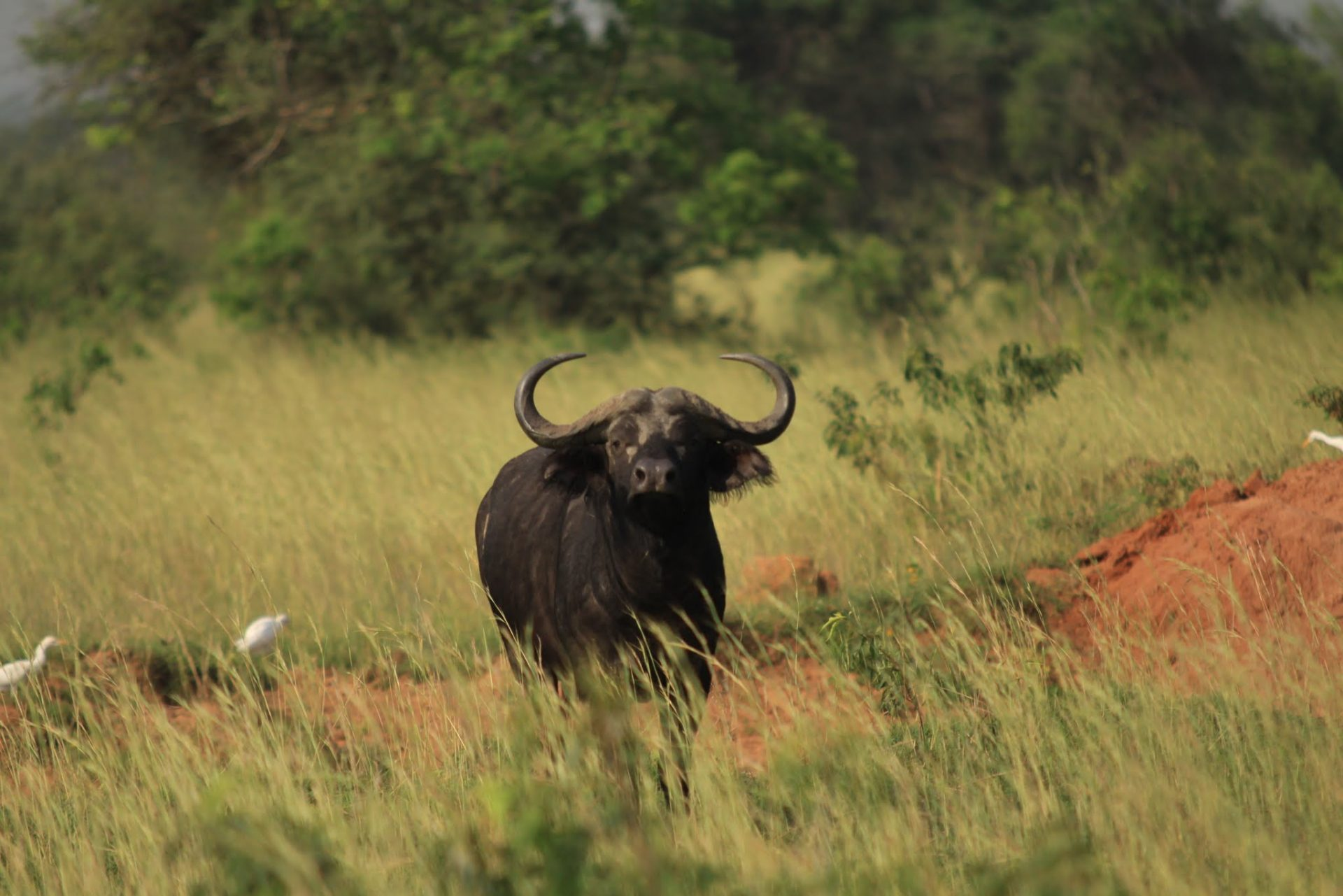 Zapiski z drogi: Murchison Falls