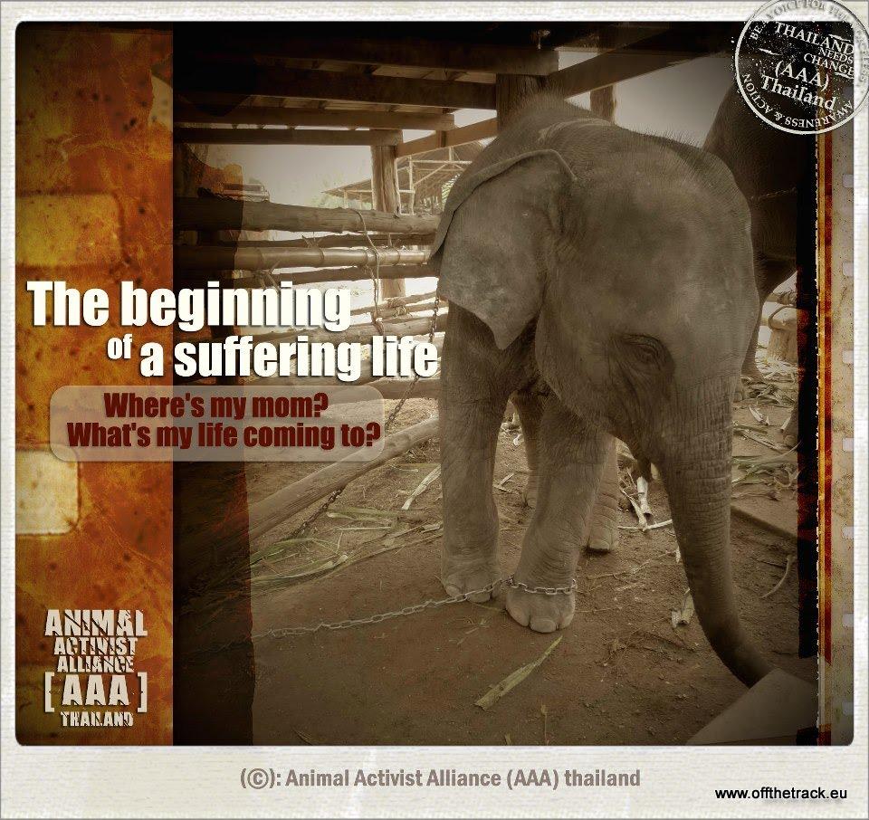 Dlaczego nie jeździliśmy na słoniach w Tajlandii