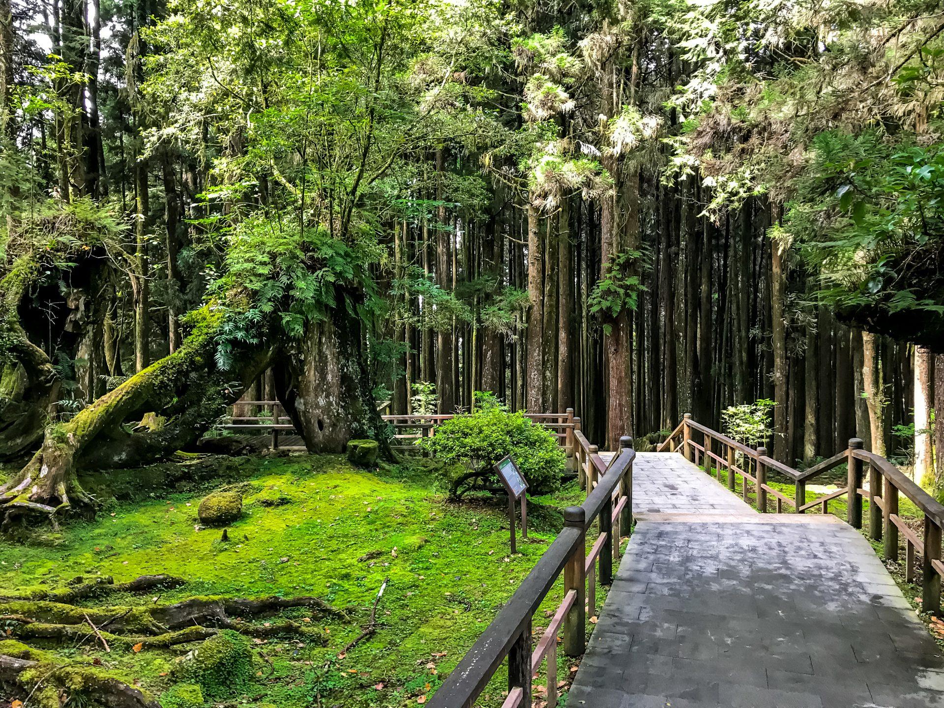 Spacer po lesie w Alishan